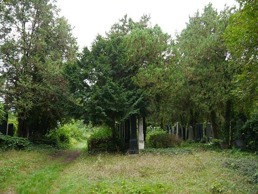 alter jüdischer Friedhofsteil