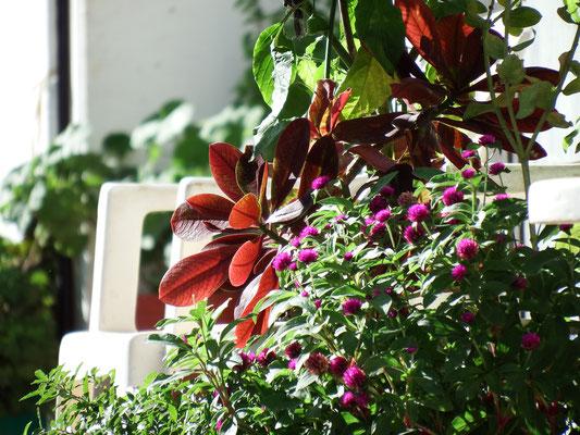 Blütenpracht auf Kreta