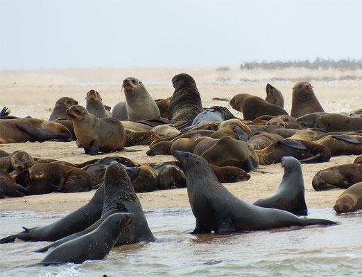 Dafür sind die Robben fotogen.