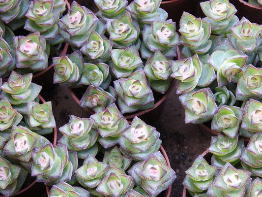 Blütenpracht in HongKong