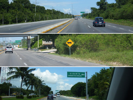 auf dem Weg zum Flughafen - von oben nach unten: (1) und läuft und läuft und läuft immer noch der Käfer (2) von wegen kreuzende Hirsche, kreuzende Jaguare!!! (3) Cirque du Soleil in Cancun! Hätten wir das gewusst, wären wir wie in Canada 2012  ...