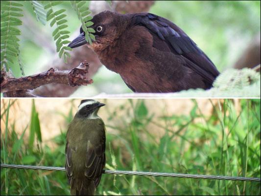 von oben nach unten: (1) wisse mer net (2) ein Webervogel, den wir erstmalig 2014 in Namibia kennengelernt haben