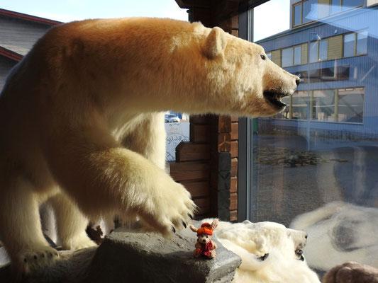 Cäsar am Fuße eines ausgestopften Eisbären