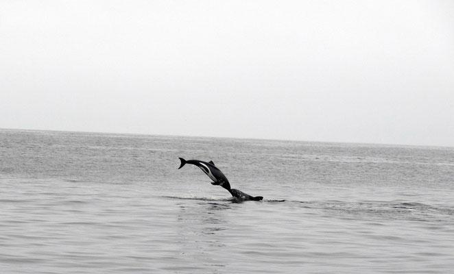 Und hier noch zwei Fotos von Rolf Sandig, dem nicht nur bei den Delfinen, ...