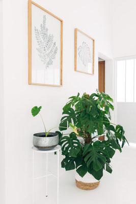 Petit coin de plantes