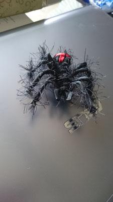 Behaarte Spinne Schwarz mit rotem Kreuz