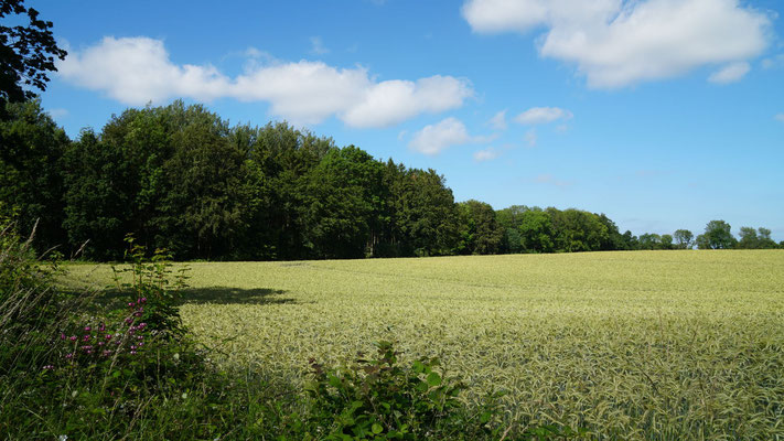 Wald, Landhaus Esgrus, Rundhof