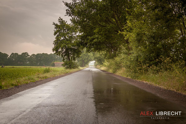 Altenoythe_Feld