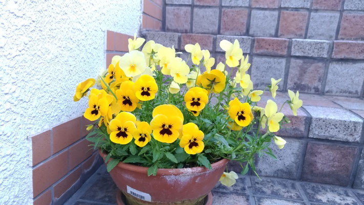 リセッタ小倉南区リラクゼーションマッサージ店にある花