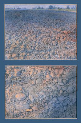 Das Feld, (The Field) 70x50cm