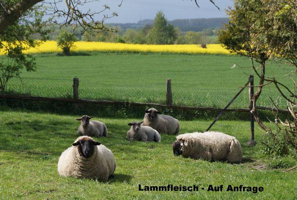 Zufriedene Schafe