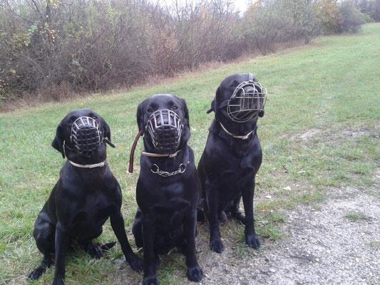 Maulkorb - Gang