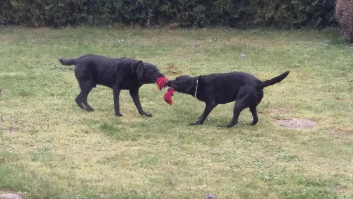 Spielen im Garten - ich glaub sie mögen ihn