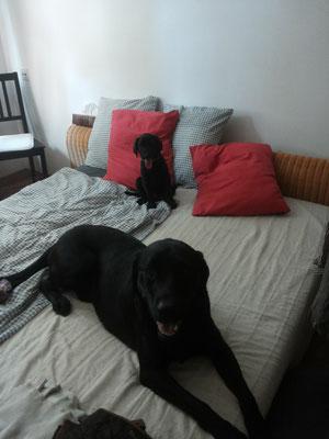 Falk blieb eine Woche länger und das Bett war Lieblingszone