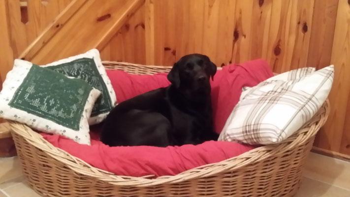Ein Hund von Welt !!!