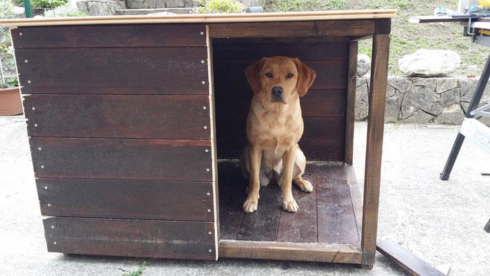 Herrli hat eine Hütte gebaut ....
