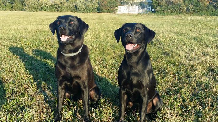 Training unter Brüdern (Ledger und Bentley)