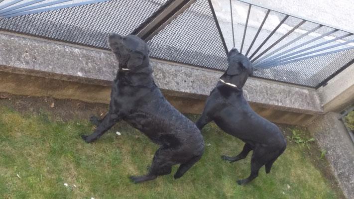 Wir sind die neuen Wachhunde - Also ACHTUNG!!!