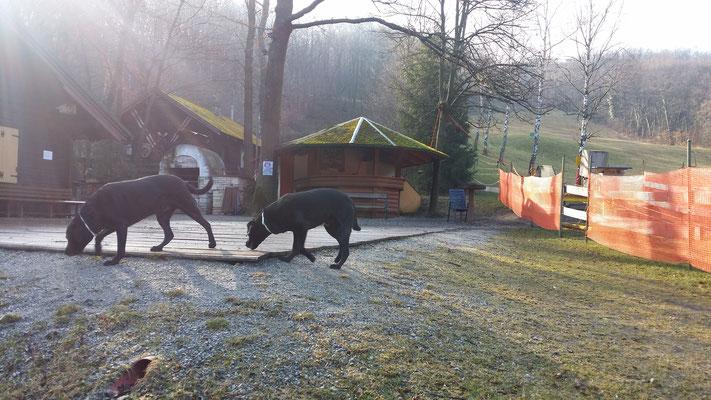 Die Skiwiese in Mannersdorf besucht!
