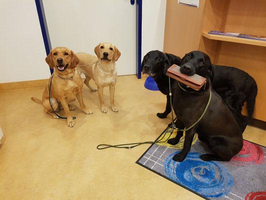 Beim Tierarzt - Kontrolle