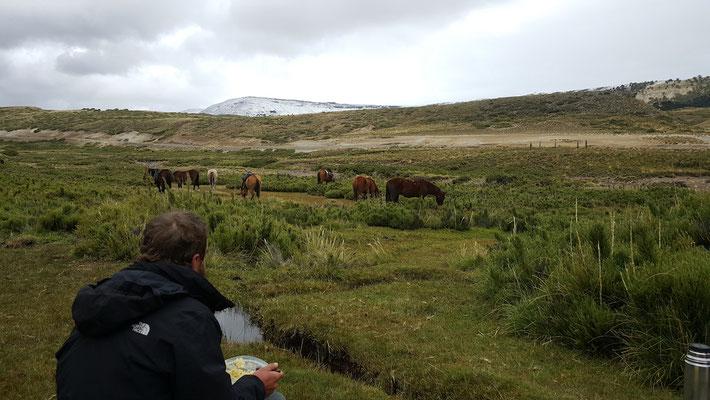 Verdiente Pause für Pferde und Reiter - 70km waren in zwei tagen zu bewältigen