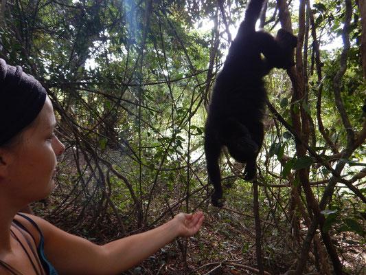 Affenfütterung