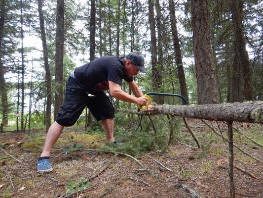 Holzbeschaffung fürs Feuer