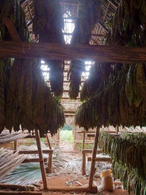 Tabakscheune