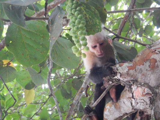 Zweiter Besuch im Nationalpark Cahuita