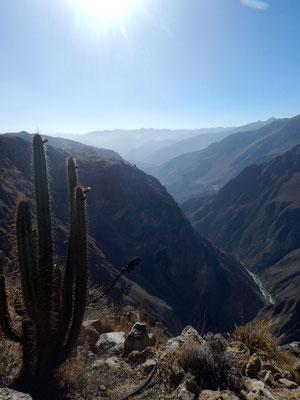 herrliche Aussicht in den Canyon