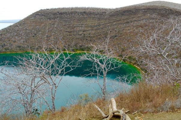 Lagune bei Tagus Cove