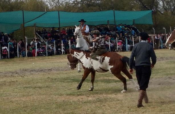 Bereits die Kleinsten nehmen am Rodeo teil