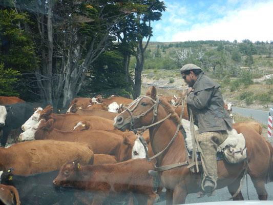 Gaucho/Cowboy
