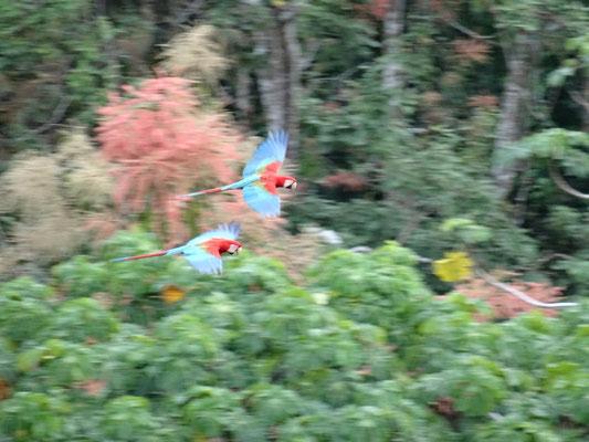Papagei und Mamagei...
