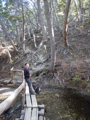 zuerst gemütlich durch den Wald...