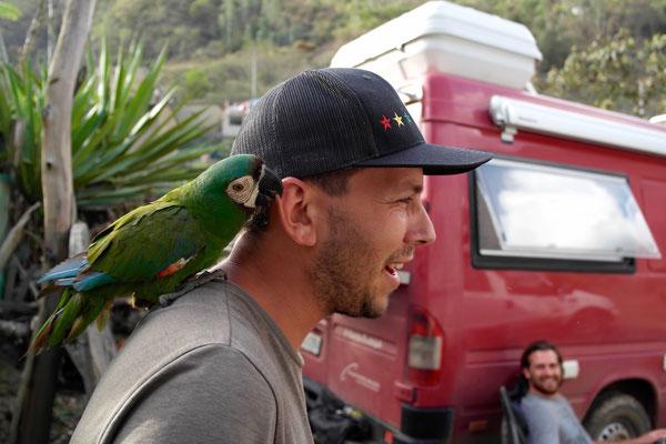 der freche Papagei