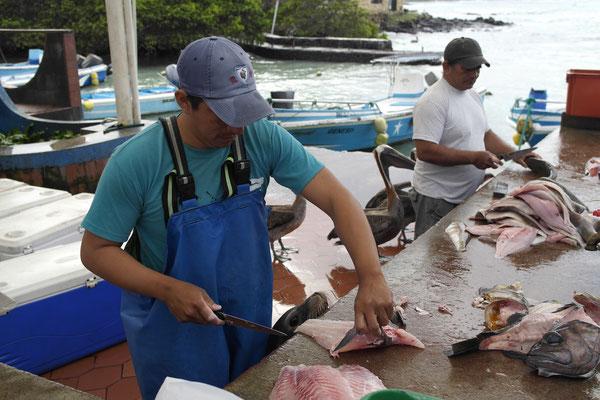 Fischmarkt mit Seelöwen und Pelikanen