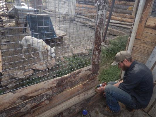 Reparaturarbeiten an den Hundezwingern
