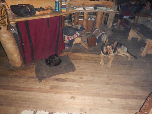 Katze Tita krallt sich Pepes Schlafplatz