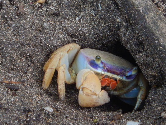 Mr. Crabs
