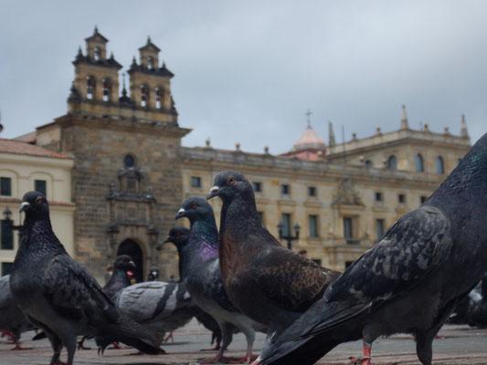hier herrschen die Tauben