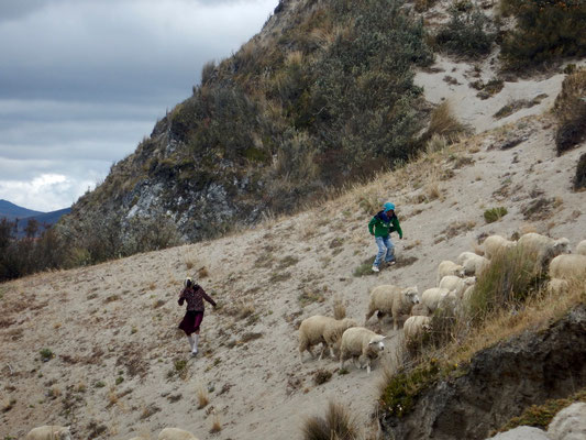Schafe hüten ist Kindersache