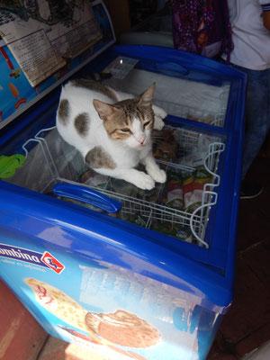 Sogar der Katze ist es zu heiss, da kommt die Gefriertruhe gerade gelegen ;-)