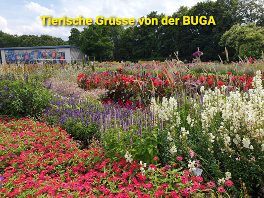Tagesfahrt BUGA Erfurt