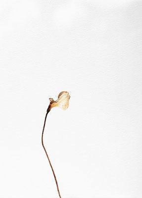 Quello che resta #4 - Acquarello su carta - cm 56 x 76 - 2013