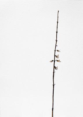 Quello che resta #1 - Acquarello su carta - cm 56 x 76 - 2013