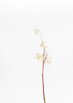 Quello che resta #6 - Acquarello su carta - cm 56 x 76 - 2013