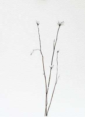 Bianco carta#15 - acquarello su carta - cm 56 x 76 - 2015