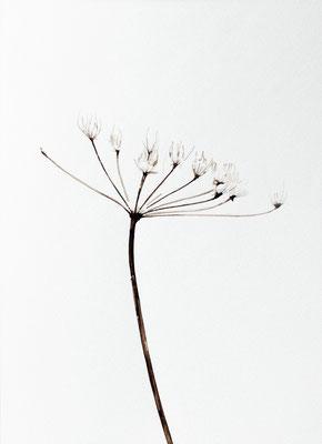 Bianco carta#0 - acquarello su carta - cm 56 x 76 - 2013