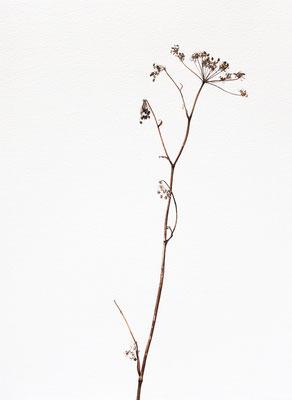 Quello che resta #2 - Acquarello su carta - cm 56 x 76 - 2013